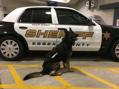 K9 in front of vehicle